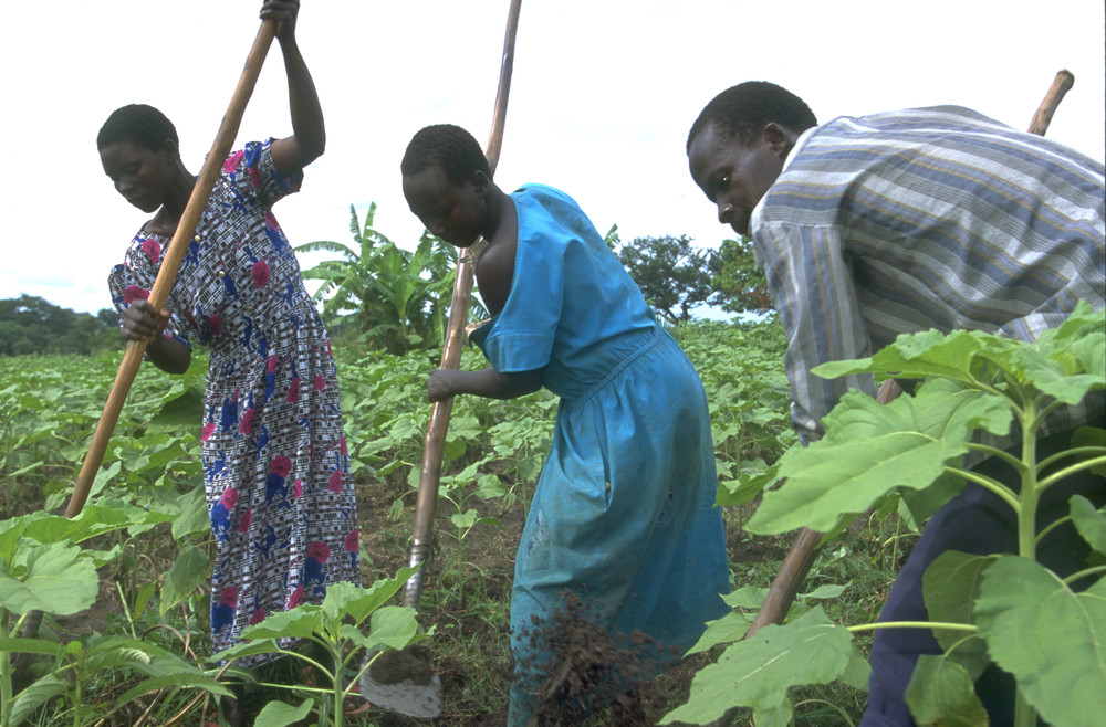 Culture and Gender Inequality in Uganda