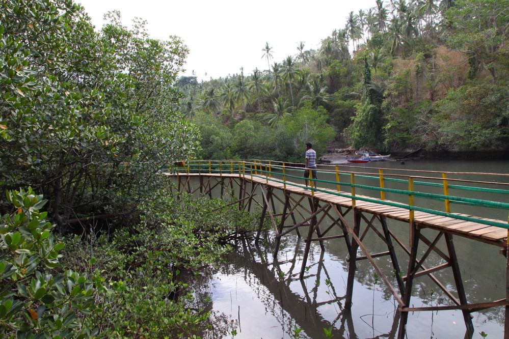 A mangrove preservation and ecotourism development site in Pintu Kota, Lembeh Island, North Sulawesi. Walkways have been built on stilts by the community infrastructure group.