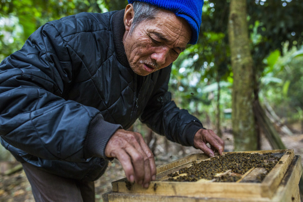 Nguyen Ngoc Lanh inspects a beehive at their apiary. In the past, Nguyen would only breed bees for family-use, but since working with a local community group he was able to acquire new equipment and training. The community group, led by Nguyen, now have an apiary of sixty beehives ©IFAD/Minzayar Oo/Panos