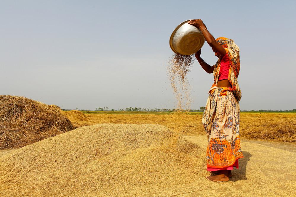 Women drying rice in Pach Bibi. Joypur Haat.
