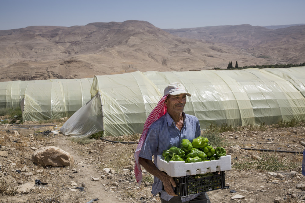 An agricultural worker picks vegetables from an IFAD-supported greenhouse in a remote rural area of Jordan. Agriculture is key to solving some of the world's most pressing problems, from hunger and poverty to migration to climate change and conflict. ©IFAD/Ivor Prickett/Panos