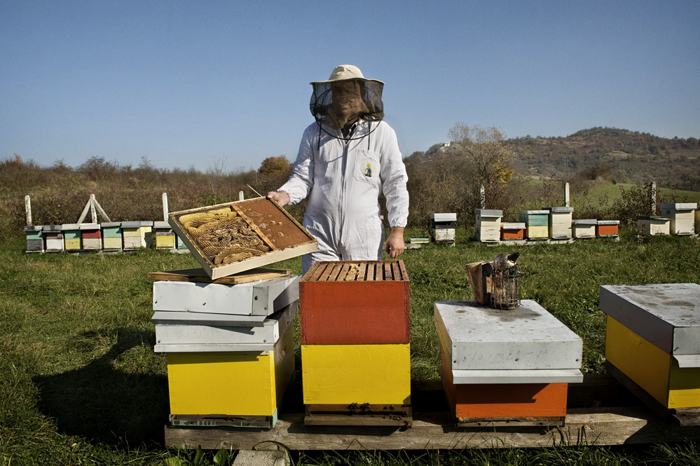 Nazif Cehakic is a beekeeper in Bosnia and Herzegovina. Together with his family Nazif produces honey based products destined for the local market. The company produces up to six tonnes of honey per year. Nazif collaborated with the Rural Enterprise Enhancement Project and increased his yield by 20 per cent.