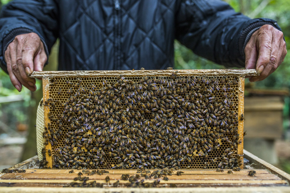 Beekeeping can be an essential lifeline for smallholders and subsistence farmers in rural areas to generate income