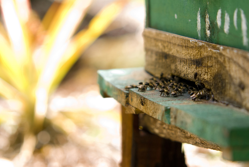 Beekeeping can be an essential lifeline for smallholders and subsistence farmers in rural areas to generate income.